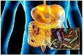 Le microbiote et la santé, focus sur le microbiote Bucco-Dentaire